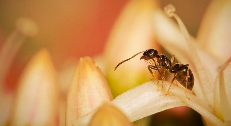 Muitas formigas na sua casa