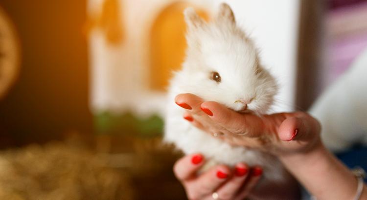 coelhos de estimação