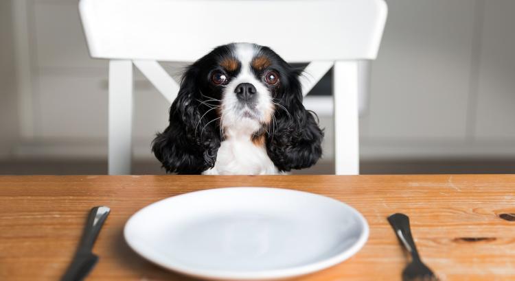 o que cachorro pode comer