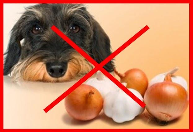 cachorro não pode comer