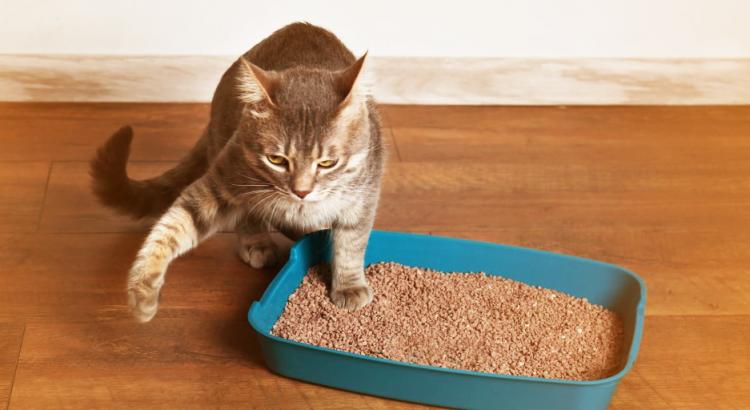 mau cheiro da areia do gato