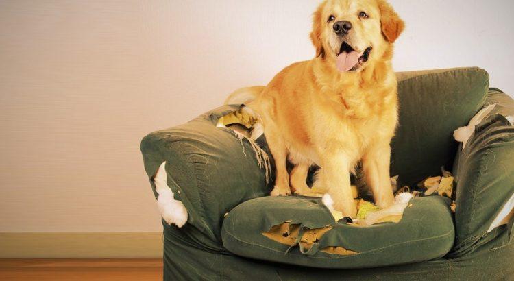 Não aguenta mais o seu cachorro destruindo seus móveis?