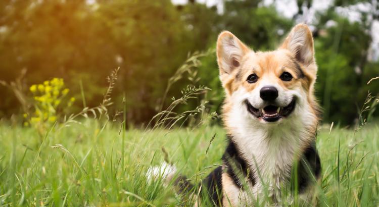 Cachorro feliz