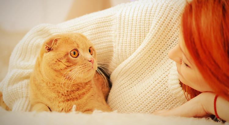 Gatos ronronam