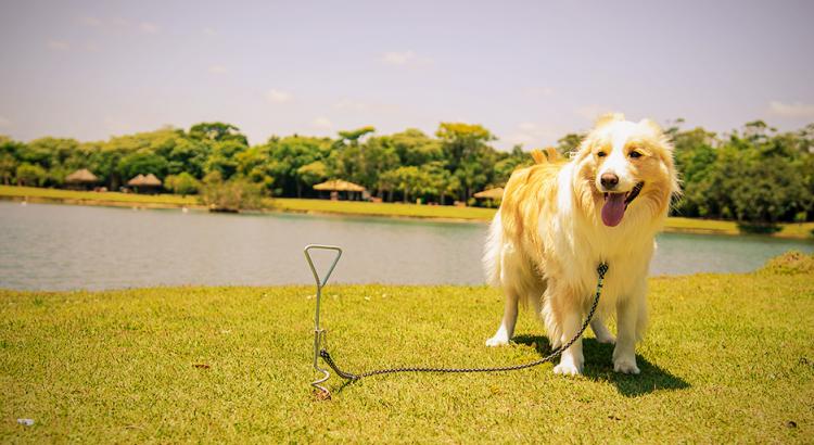 Passear com o cachorro