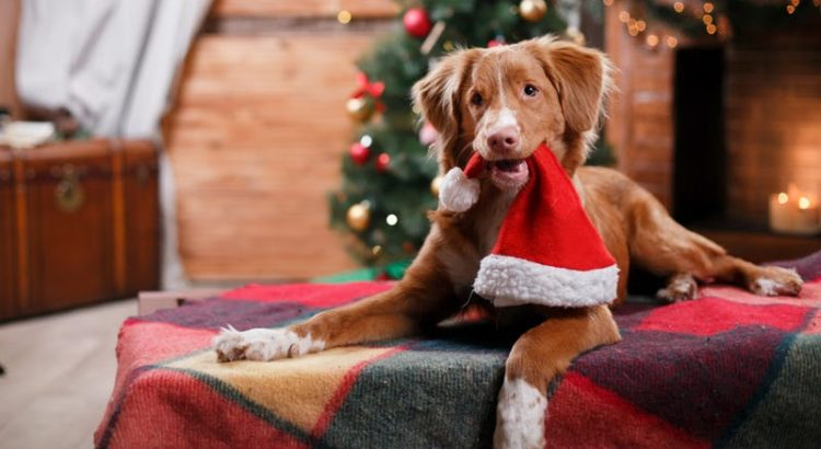 aumentar as vendas no seu pet shop
