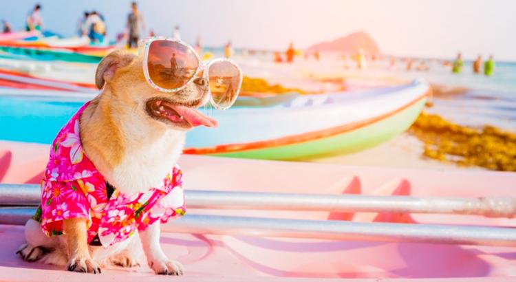 cuidados com os animais no verão