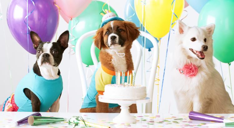 Festa de Aniversário Pet