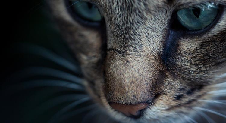 bigode de gato