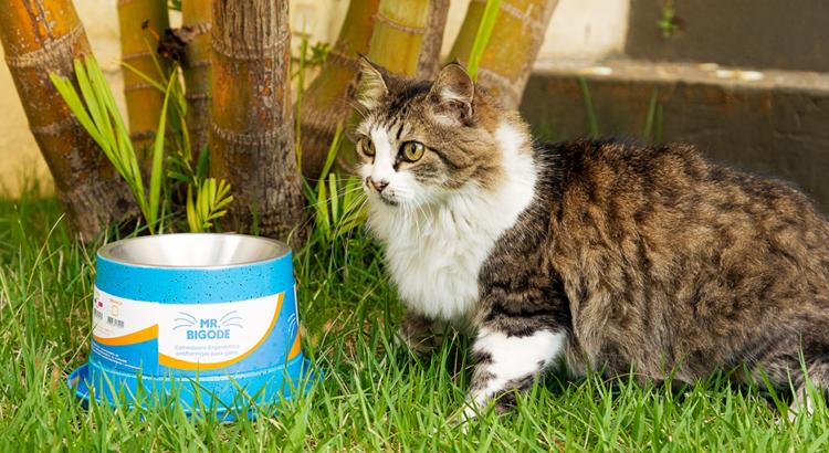 Gatinho na grama ao lado do Mr. Bigode (comedouro especial para gatos)