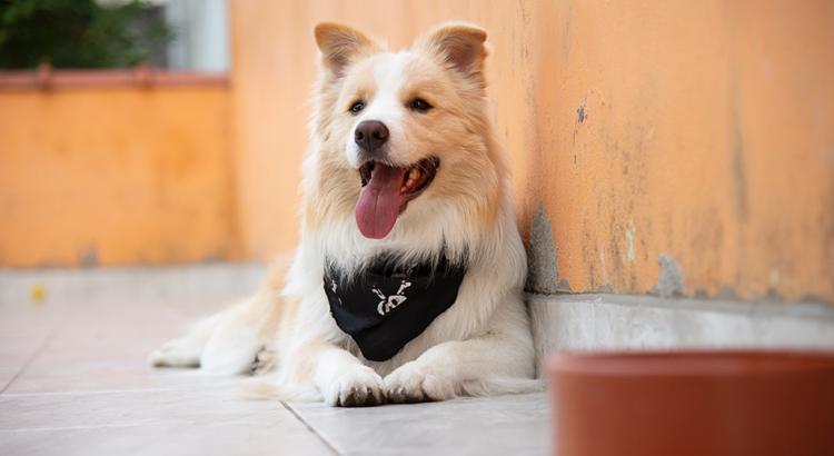 Cachorro ao lado de um pode de cerâmica