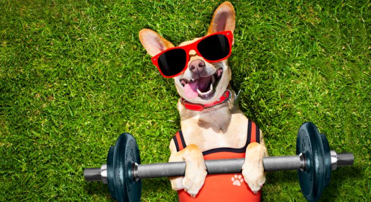 Cachorrinho deitado na grama com óculos de sol e pelo de academia