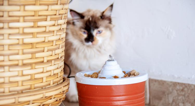 Gato ao lado de uma fonte para beber água fresca