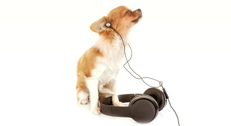 cachorro relaxado ouvindo musica
