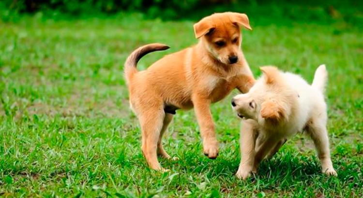 Dois cachorrinhos brincando