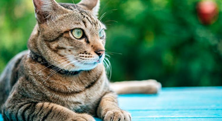 gato deitado ao ar livre