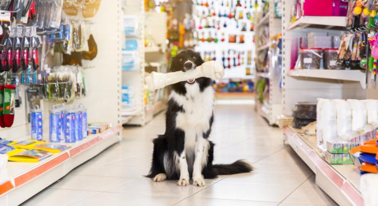 cachorro com brinquedo na boca em um petshop